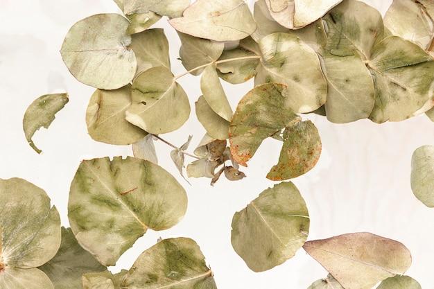 Folhas verdes pálidas em água de cor branca