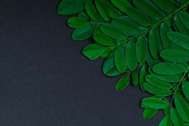 Folhas verdes pretas no fundo