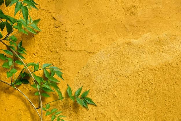 Folhas verdes que decoram na parede amarela na cidade velha de marbel