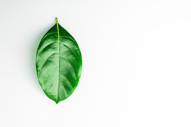 Folhas verdes sobre fundo branco.