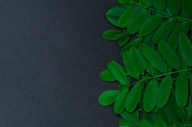 Folhas verdes sobre fundo preto com espaço de cópia.
