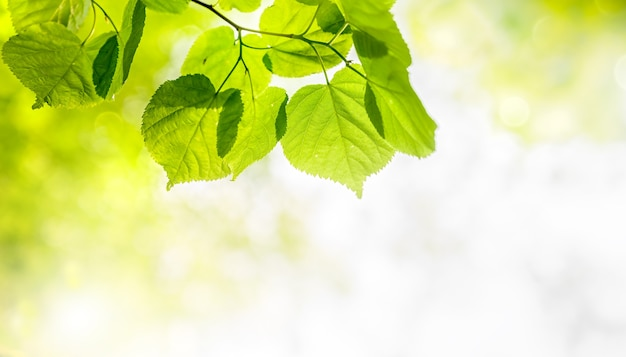 Folhas verdes sobre fundo verde borrado com bokeh. paisagem de plantas verdes naturais, conceito de papel de parede ensolarado fresco.