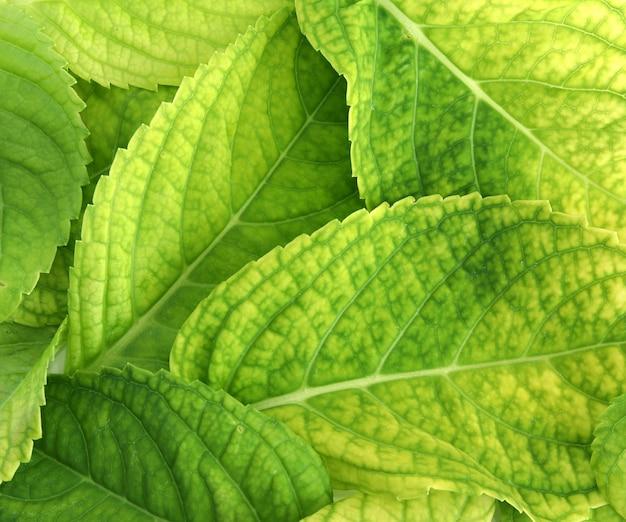 Folhas verdes textura de fundo