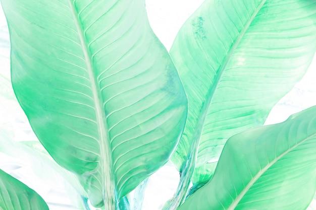Folhas verdes textura e padrão de fundo