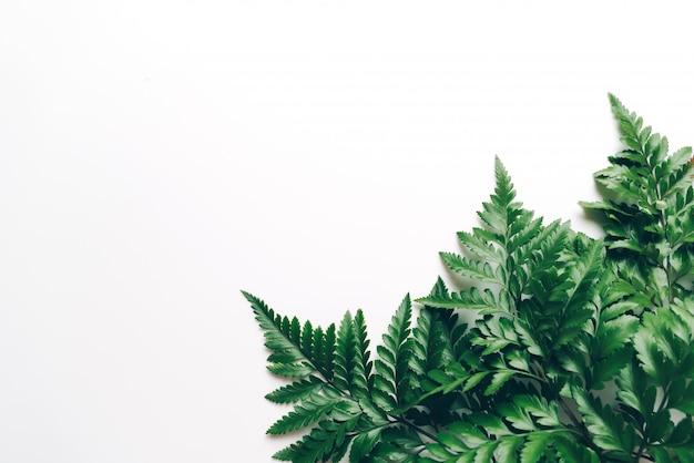 Folhas verdes tropicais em fundo branco