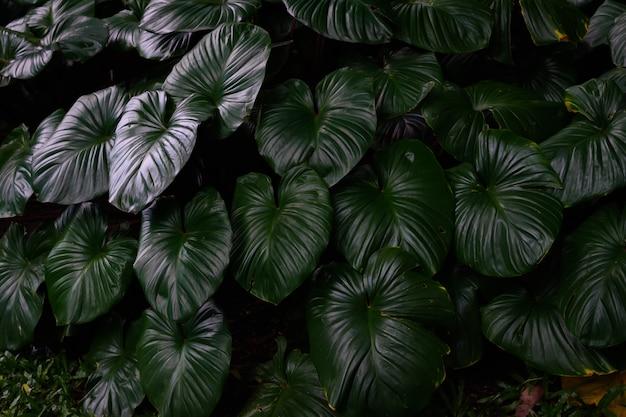 Folhas verdes tropicais em luz natural e sombra com cor verde tonificada e foco seletivo
