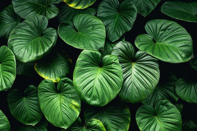 Folhas verdes tropicais fundo bela vista da natureza