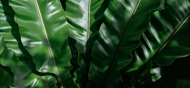 Folhas verdes tropicais, fundo de textura de folha