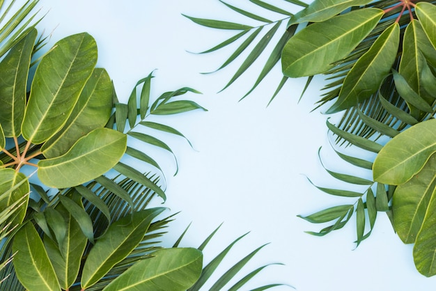 Folhas verdes tropicais palm fundo
