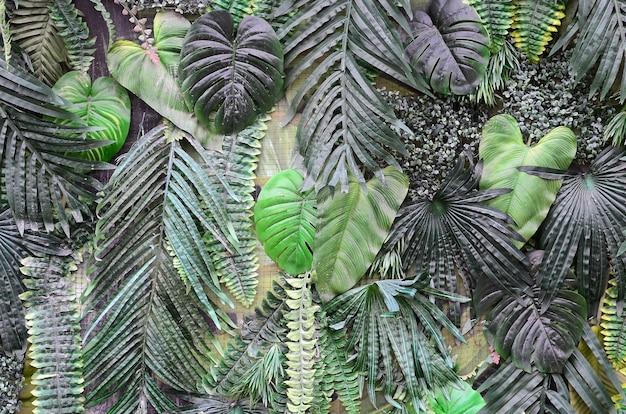 Folhas verdes tropicais, samambaia, palma e folha de monstera deliciosa na parede