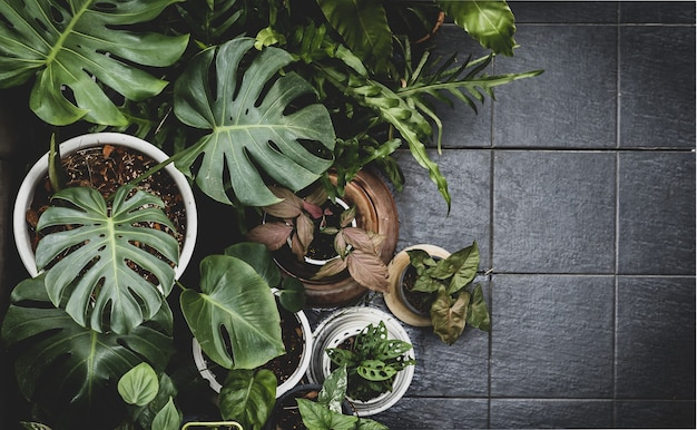 Folhas verdes tropicais vistas de cima - vista aérea