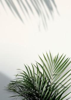 Folhas verdes tropicais