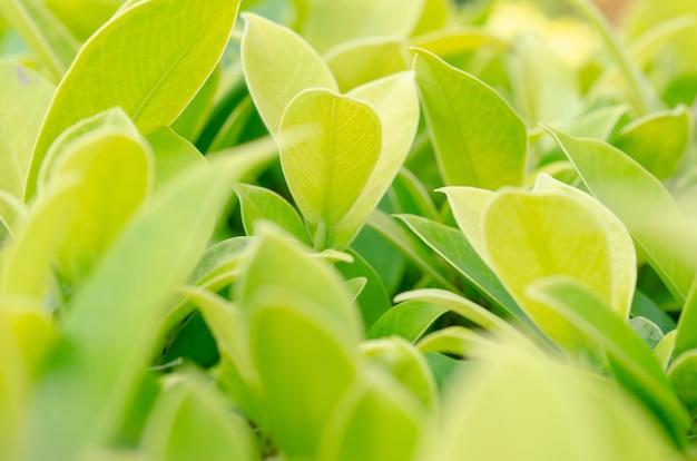 Folhas verdes turva com fundo borrado