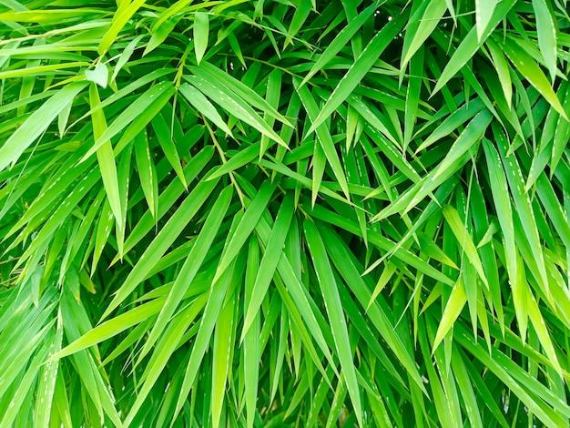 Folhas verdes vibrantes