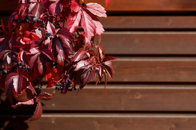 Folhas vermelhas de outono e bagas azuis em fundo escuro de madeira