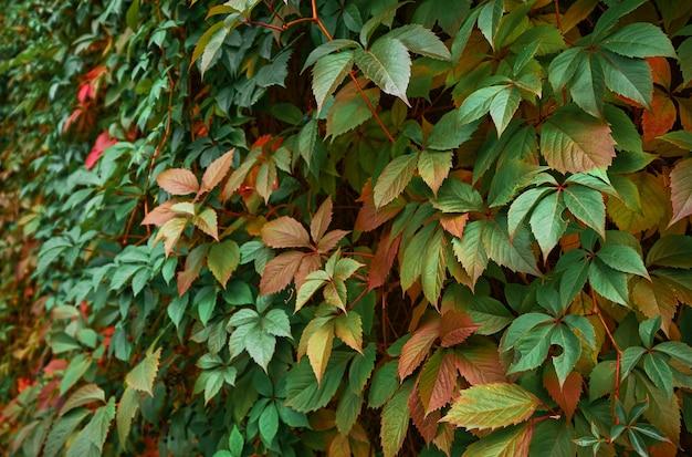 Folhas vermelhas e verdes no parque
