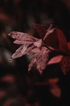 Folhas vermelhas no meio da floresta