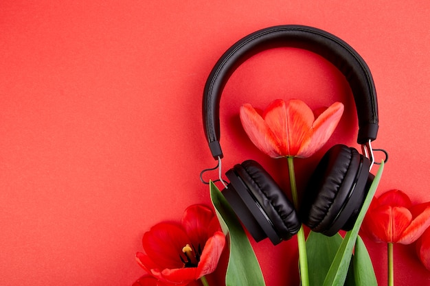 Fones de ouvido pretos e buquê de tulipas vermelhas sobre fundo vermelho.