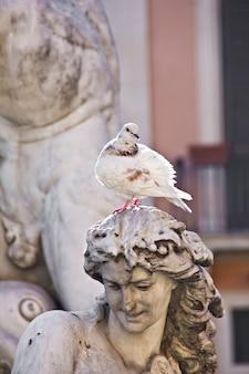 Fonte e pomba da estátua na piazza navona em roma (itália)