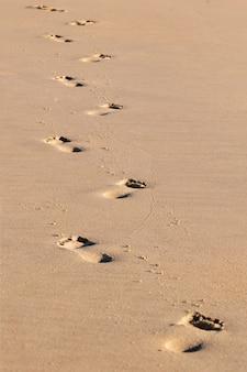 Footprints trilhas saindo à distância na areia