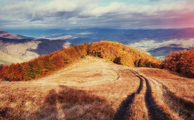 Forest road no outono. paisagem ucrânia europa