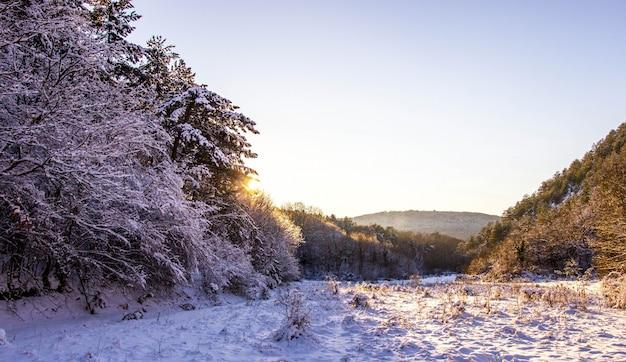Forets da criméia no inverno. belo pôr do sol no bosque nevado.