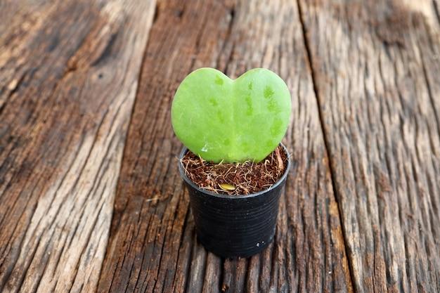 Forma de coração de folha verde no vaso de flores