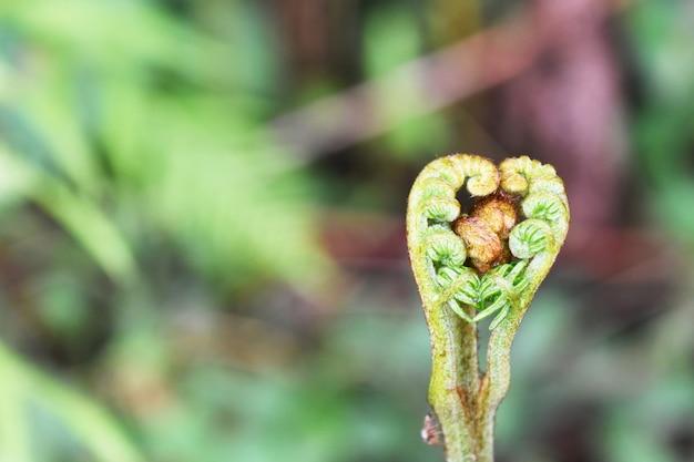 Forma de coração de samambaia bracken em plantas borradas