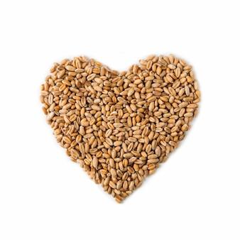 Forma de coração isolado de sementes de trigo maduro
