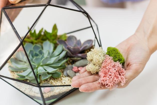 Forma de vidro e metal para plantas e interiores, suculentas, areia, terra e plantas. decoração de casa ou escritório e design de interiores. plantando plantas e criando um design
