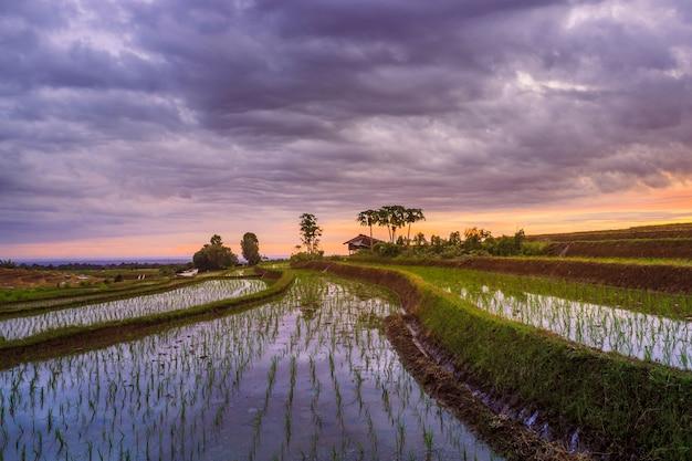 Formações de terraços de arroz em bengkulu utara, indonésia, belas cores e luz natural do céu