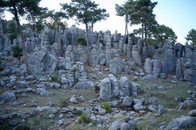 Formações rochosas e pinheiros. fundo de bela natureza.