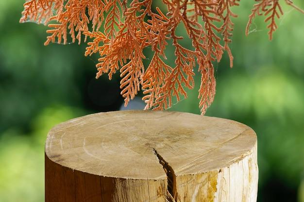 Formato de cilindro redondo de serra de madeira para exposição de produto com fundo de folhas secas de arborvitaes