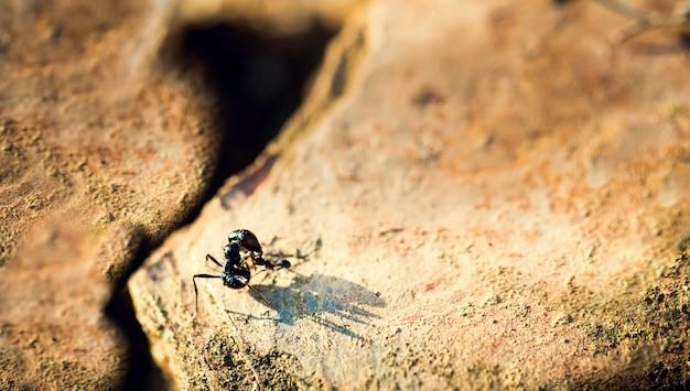 Formiga pequena atacando formiga grande