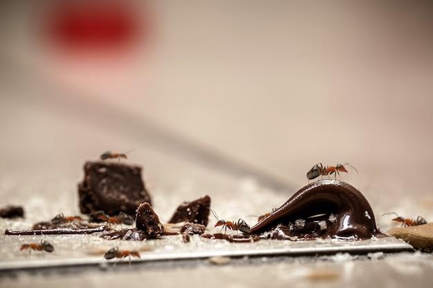 Formigas doces no chão, comendo sobras de balas, migalhas e chocolate
