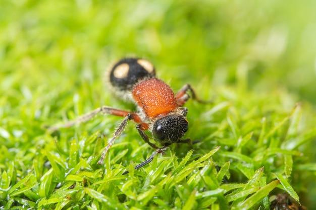 Formigas macro em plantas
