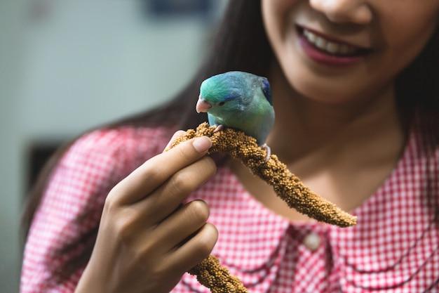 Forpus papagaio pássaro na mão da mulher