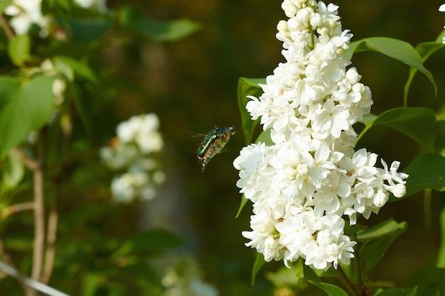 Forra verde na flor lilás branco
