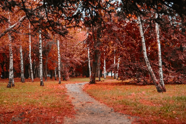 Forrest preto. orange evening sun brilha através da floresta nublada dourada woods. autumn forrest mágico. folhas de outono colorido.