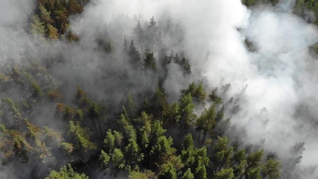 Forte incêndio florestal em uma floresta de coníferas. incêndios nos eua em 2020