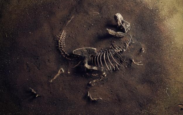 Fóssil de dinossauro (tyrannosaurus rex) encontrado por arqueólogos