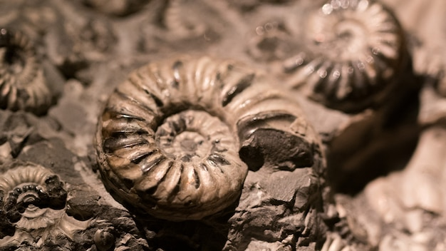 Fóssil e amonite para energia de combustível