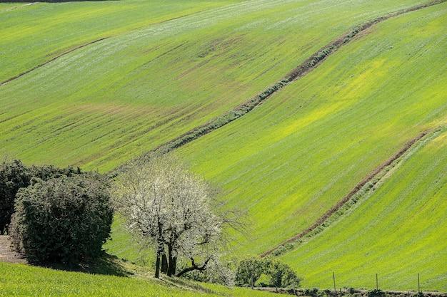 Foto aérea das árvores em um lindo campo coberto de grama sob a luz do sol