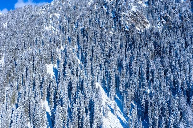 Foto aérea de abetos cobertos de neve em uma montanha