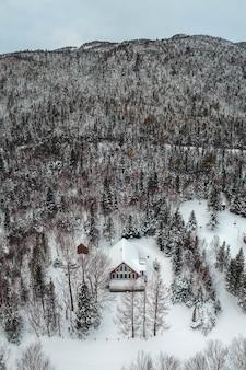 Foto aérea de árvores verdes