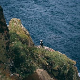 Foto aérea de um pássaro na rocha no oceano