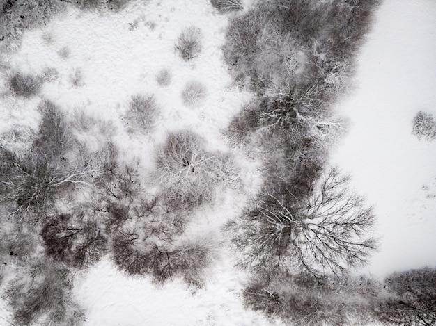 Foto aérea de um terreno nevado com árvores sem folhas