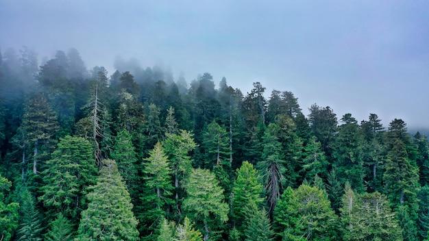 Foto aérea de uma bela floresta em uma colina, rodeada por névoa natural e névoa