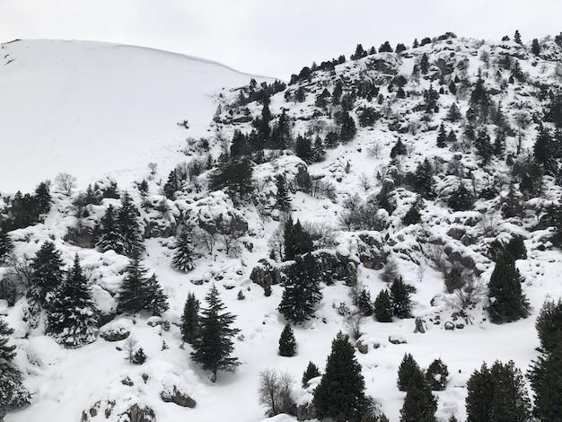 Foto aérea de uma encosta de montanha nevada com pinheiros