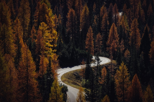 Foto aérea de uma estrada cheia de curvas no meio de árvores amarelas e verdes